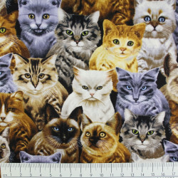 timeless treasures fabrics cotton fabric cats by Michael Searle USA